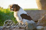 Brisa möchte nun endlich ankommen