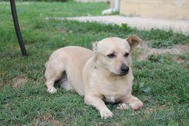 Ein ganz besonderer Bub Vincent: Kleinanzeigen aus Schwabach - Rubrik Hunde
