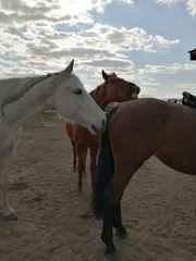 Reitunterricht Umgang mit Pferd für