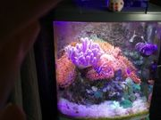 Sera Marin cube meerwasser