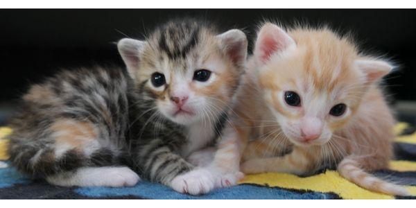 Wunderschöne verschmuste Bengal Mix Kitten