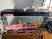 160 Liter Aquarium mit barschen