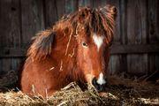 Deine Zeit am Pferdestall