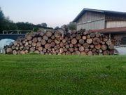 stammholz zu verkaufen