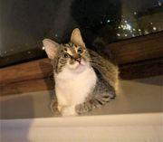 Katze Nici schmust