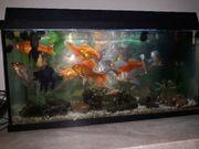 Aquarium Start 80