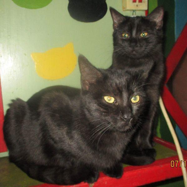 Geschwister Charlie und Luna warten