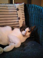 Katze Piccolina sucht dringend ein