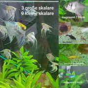 Fische mit aquariumpflanzen
