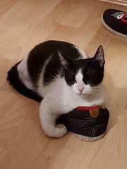 Mini - verspieltes liebes Katzenmädchen sucht