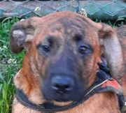 JAKSON - allerliebstes Hundekind - sehnt sich