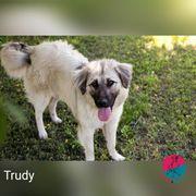 Trudy - Anführen oder verführen Das