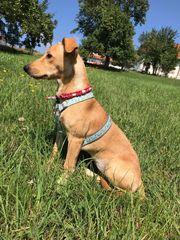 hundebetreuung Mora