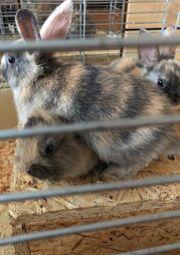3 Baby Kaninchen