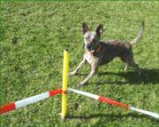 DCD Longieren - Hundeschule Amperland