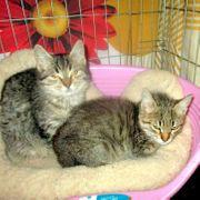 Geschwisterpärchen Tina und Thommy suchen