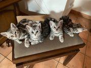 Whiskas Mix Kitten