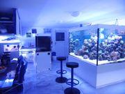 Aquariumbau