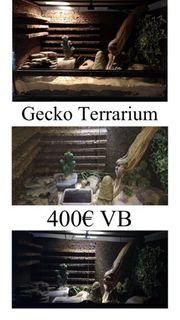 Leopardgeckos Terrarium Zubehör