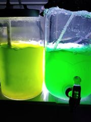 Verkaufe hochwertiges Phytoplankton N salina -