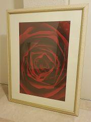 Bild Rose mit edlem Holzrahmen
