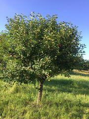 Obstbaumwiese Wiese Grundstück Stückle Garten