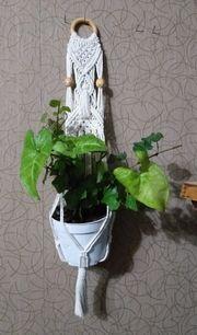 Grünpflanzen Ableger