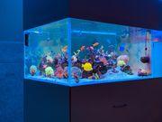 Korallen SPS LPS Meerwasser