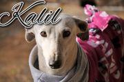 Kalil möchte sein Glück finden