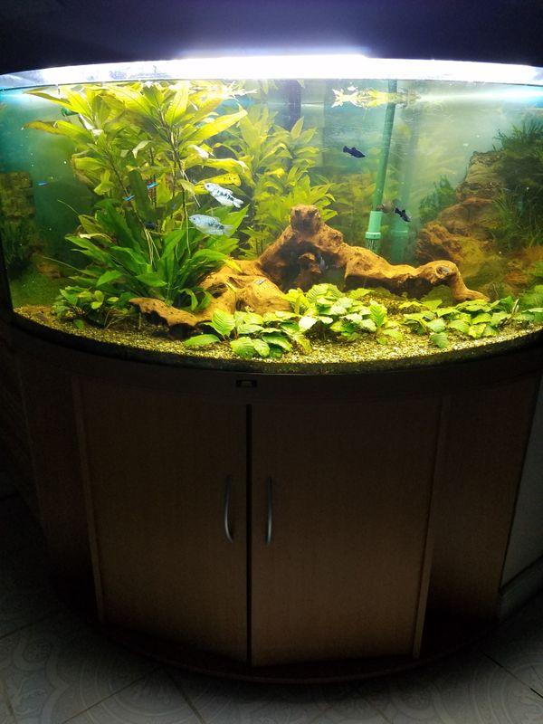 Juwel Eck - Aquarium 350l mit