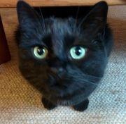 Erfahrener Katzenpapa bietet Tierbetreuung
