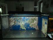 Meerwasseraquarium für Einsteiger