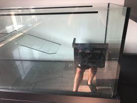 Aquarium für Schildkröten 130cm inkl: Kleinanzeigen aus Nürnberg Gostenhof - Rubrik Fische, Aquaristik