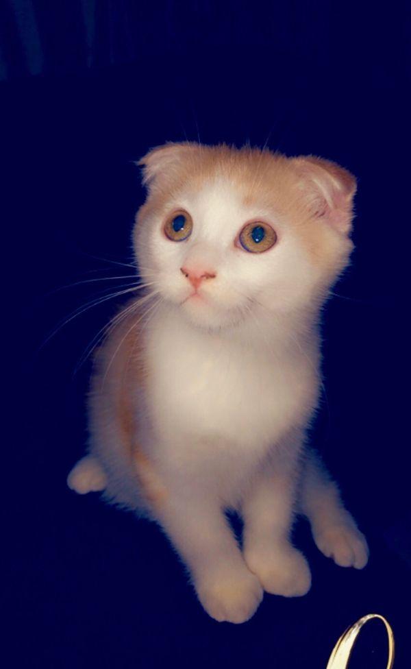 süße Baby-Kätzchen