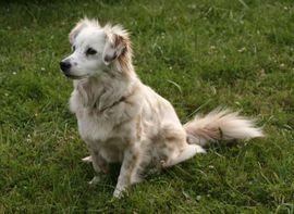 Hündin gesucht: Kleinanzeigen aus Rheinstetten - Rubrik Hunde