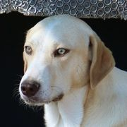 Aurelio vom Hundegarten freut sich