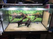 Aquarium 360 Liter