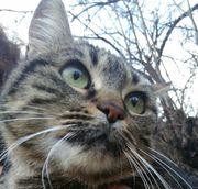 Katze Amalia sucht