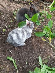 Bezaubernd süße Kaninchen-Babys suchen Dich