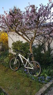 MTB Fahrrad für Mädchen oder