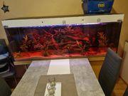 450 liter aquarium