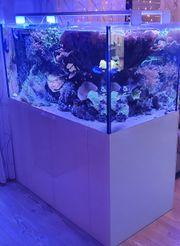 Exclusives Meerwasseraquarium Raumteiler130 70 65