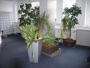 Mehrere Zimmer- bzw Kübelpflanzen zu