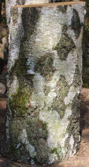Birken-Hackklotz ums eigene Brennholz zu