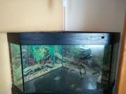 Eck-Aquarium ca 220 ltr 77x77x70