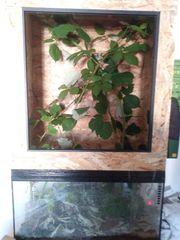 Stabschrecken mit Terrarium und Geckos