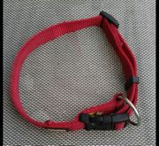 Hundehalsband und Leinen