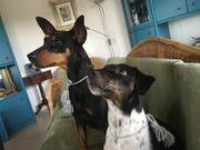 WASSERBURG hundesitter in gesucht