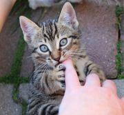 Kleine Katze Leila sucht ein