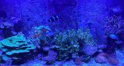 4 Jahre alt Meerwasser Ökosystem